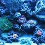 fish tank picture - actinic left