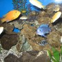 fish tank picture - mix