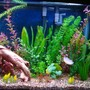 fish tank picture - View of right side