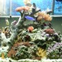 fish tank picture - Here is another front view of my reef tank. All fish get along just fine.