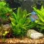 fish tank picture - planted 55