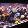 fish tank picture - Left Front View 120g Reef