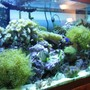 fish tank picture - aquarium