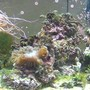 fish tank picture - my 75 reef