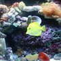 fish tank picture - My Reef