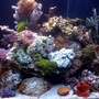 fish tank picture - This is an updated pic of my tank