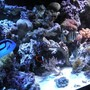 fish tank picture - more..