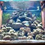 fish tank picture - tank