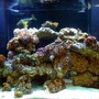 fish tank picture - 140 gallon reef tank 5 months old