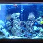 fish tank picture - 30 gallon Reef tank with AB lights on is 400 watt MH light too much for a 29 gallon