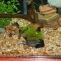 fish tank picture - Mr Turtle and the gang