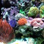 fish tank picture - favorites