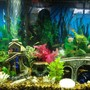 fish tank picture - partial view of Tetra tank