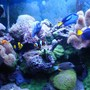 fish tank picture - Fish and corals