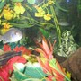 fish tank picture - Another shot of my eco...