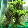 fish tank picture - My other rough skinned newt