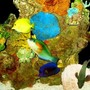 fish tank picture - Parrotfish, Speckled Grouper and Tangs