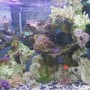 fish tank picture - right of tank