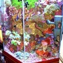fish tank picture - Closeup - opposite view