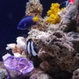 fish tank picture - Misc.