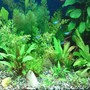 fish tank picture - The Jungle :)