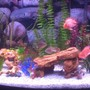 fish tank picture - Freshwater Fish