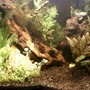 fish tank picture - Natural 20G (closer)