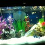 fish tank picture - my tank tropical bulb effect only