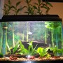 fish tank picture - 20g brackish planted assorted mollies -what rating would you give this tank?-