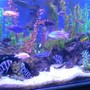fish tank picture - 300G/1200L/90 African cichlids