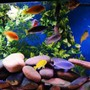 fish tank picture - 125