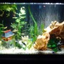 fish tank picture - Latest picture of tank