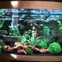 fish tank picture - Full width of community