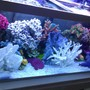 fish tank picture - The beauty of African cichlids