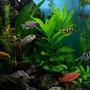 fish tank picture - Plants