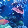 fish tank picture - Pic