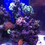 fish tank picture - More