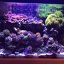 fish tank picture - Another Full tank shot