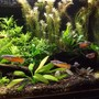 fish tank picture - another close up