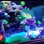 fish tank picture - Additional pictures