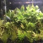 fish tank picture - 5 Gallon playground for my Dwarf Pea Puffer