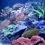 fish tank picture - 160x60x60