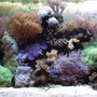 fish tank picture - My 130gallon Reef!!!
