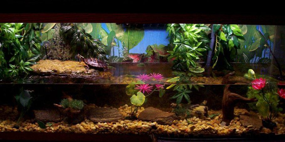 Sarajute 39 s additional tank picture photo id 37185 full for Turtle fish tank