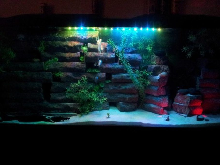 Marc317 39 s additional tank picture photo id 38182 full - Aquarium wand ...