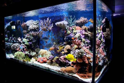 Rated #3: 210 Gallons Reef Tank - my tank (Jan 08)