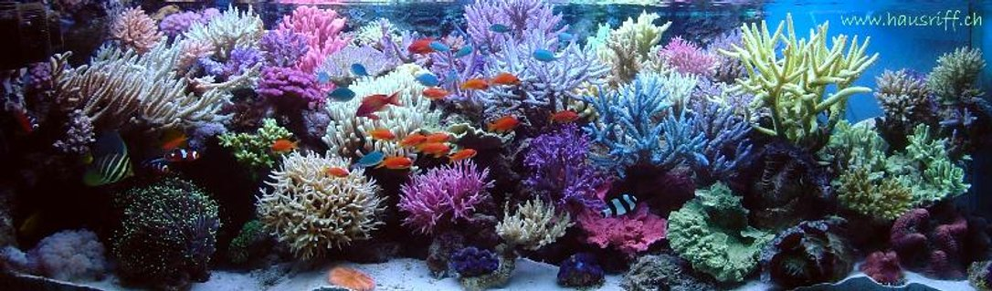 Rated #4: 210 Gallons Reef Tank - full view