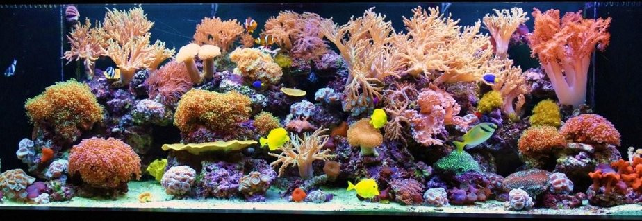 Rated #1: 200 Gallons Reef Tank - 200 Gallon Reef Tank