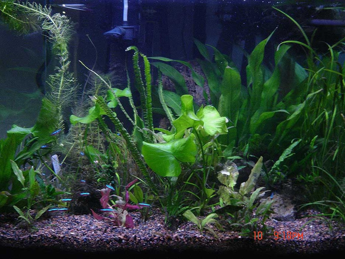 planted tank (mostly live plants and fish)