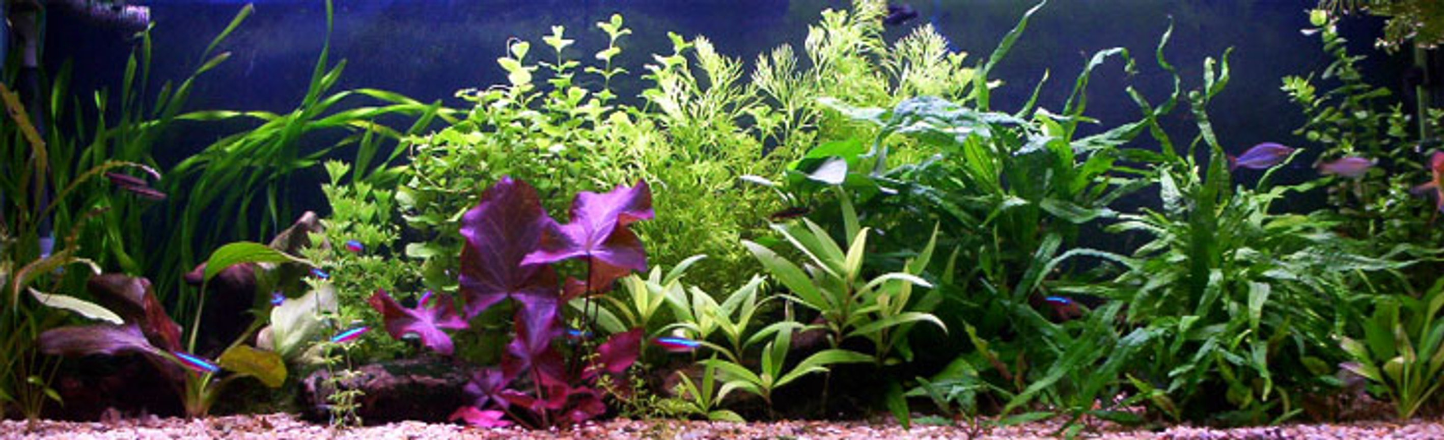 planted tank (mostly live plants and fish) - i lick but